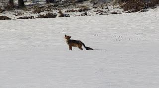 Wo sich Fuchs und ….
